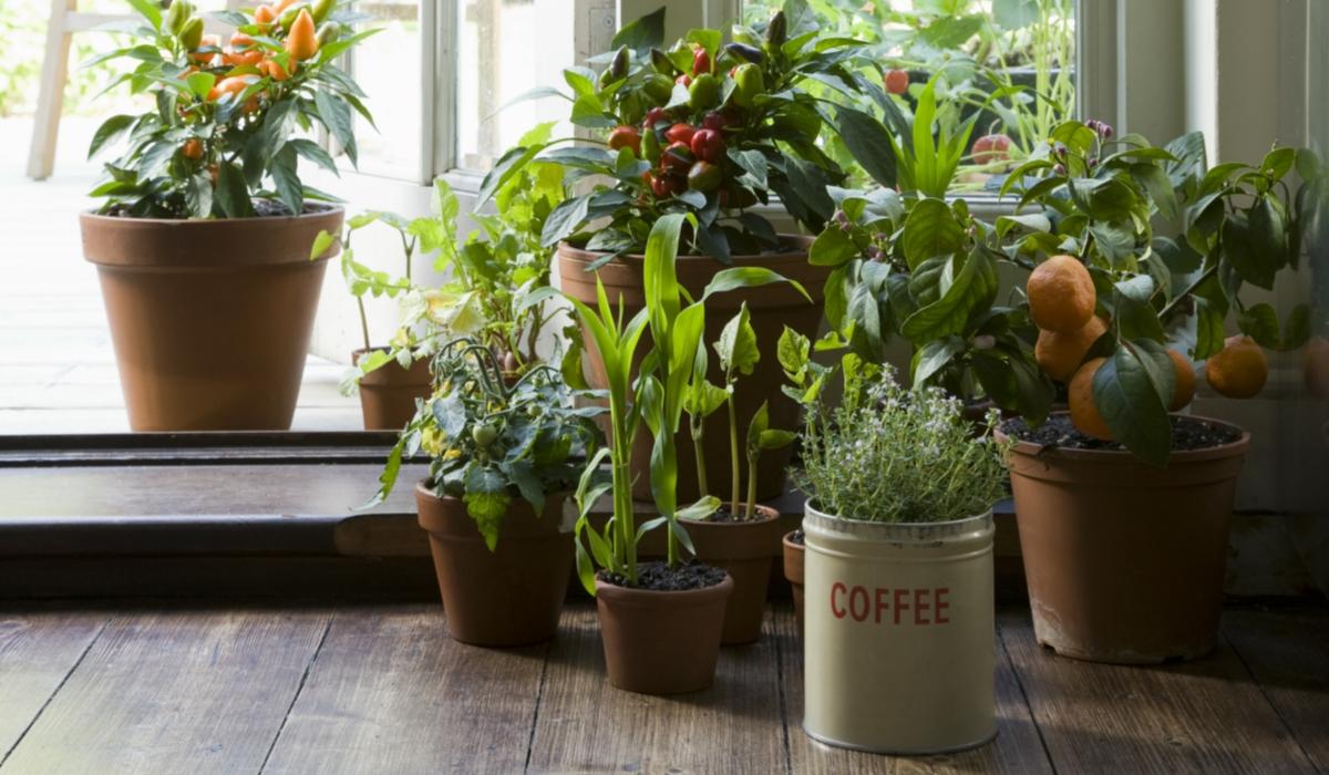 Le piante per purificare l'aria