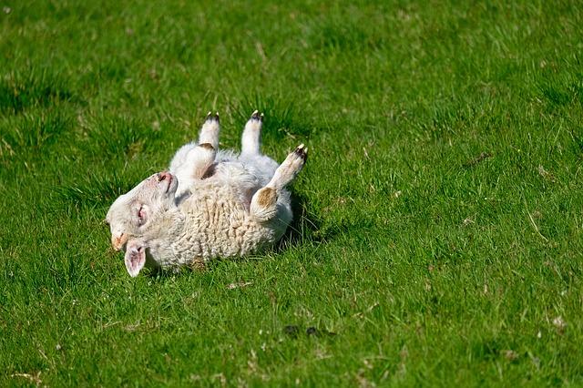 Pasqua senza agnello