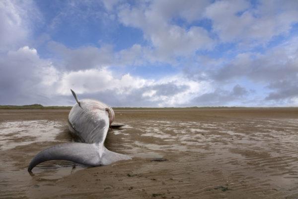 balena spiaggiata